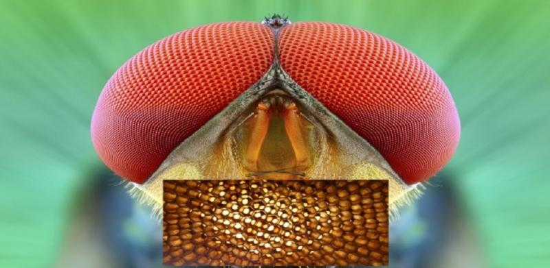 Böcek Gözünden İlham Alınan Güneş Paneli!