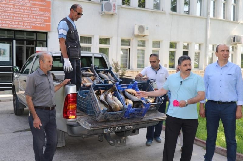 Elazığ`da 300 Kilo Kaçak Balık Yakalandı