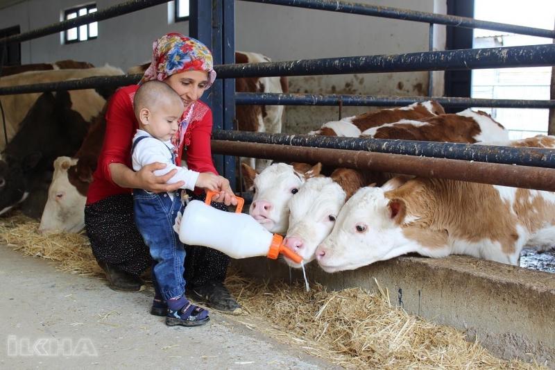 Elazığlı anne aldığı hibe desteğiyle çiftlik kurdu