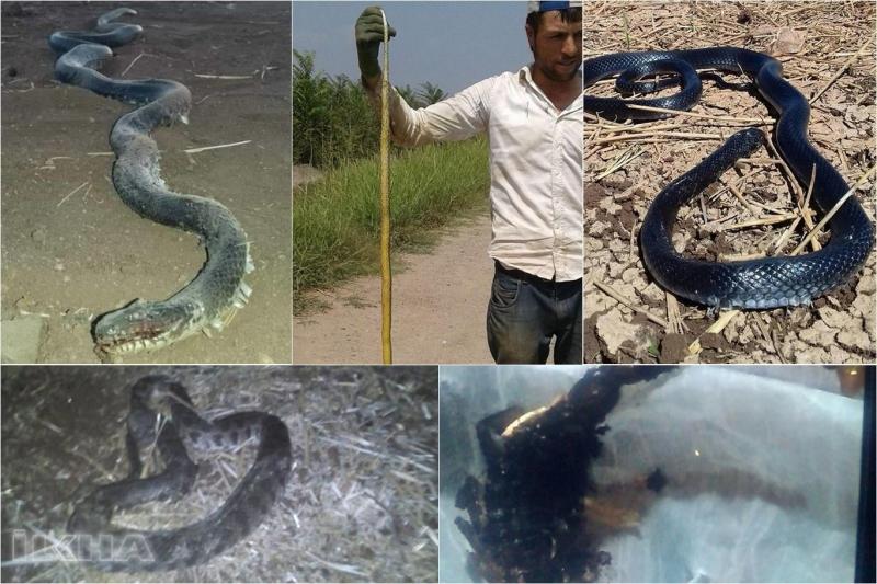 Köyü basan yılan ve akrepler tedirgin ediyor