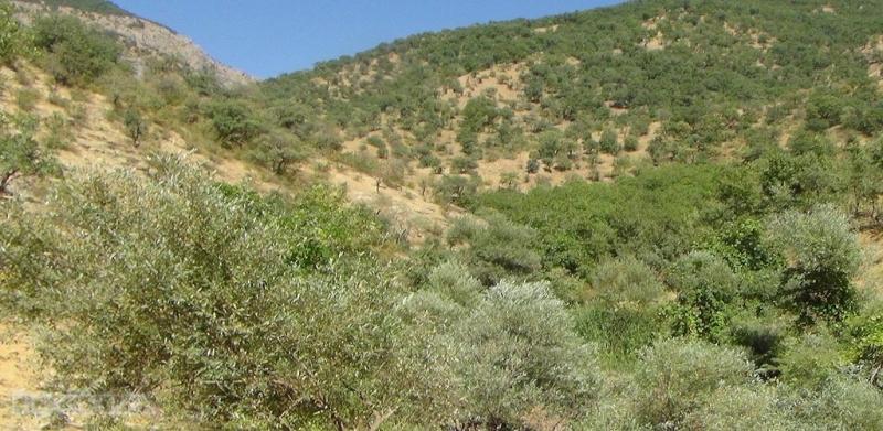 PKK odun kesmeye giden sivilleri taradı: 1 ölü 3 yaralı