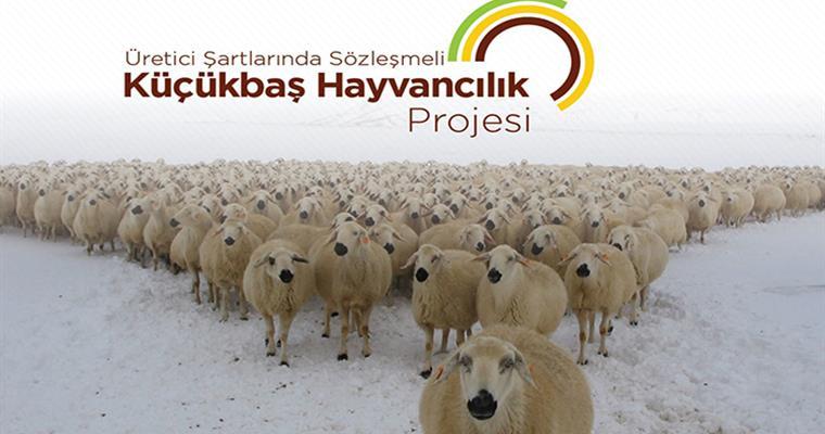 Sözleşmeli Küçükbaş Hayvancılık Projesi Başvuru Şartları Nelerdir?